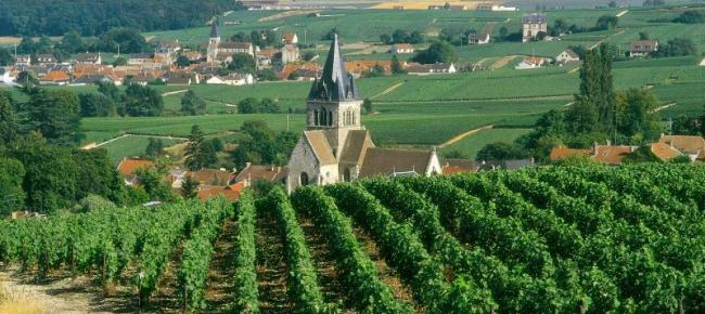 Vineyards in Champagne region seen on Walking The Spirit Tours Champagne excursion source c_michel_jolyot
